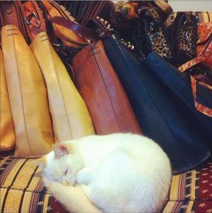 Vida de gata não é fácil! Não basta ser linda, tem que desenhar as bolsas, atender as clientes, fazer um selfie pro insta...