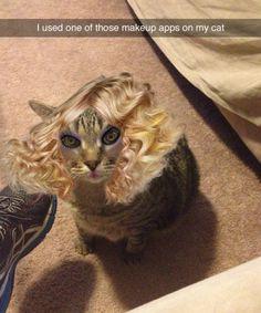 selfie app cat
