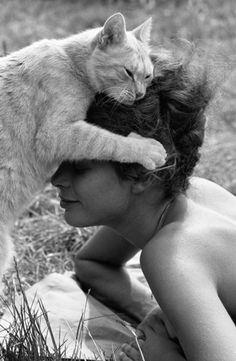 abraço de gato